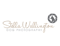 StellaPortfolioMainImage